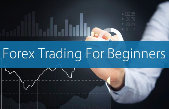 How You Can Get Success In Forex Trading As a Beginner